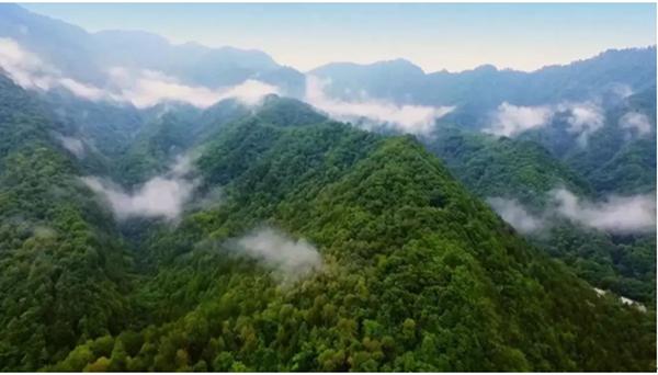 沃土如金,土壤修复助力下的美丽中国